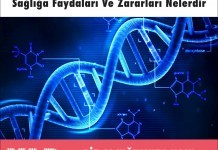 Genetik Miras Nedir Sağlığa Faydaları Ve Zararları Nelerdir?