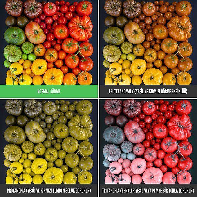 Yedi Fotoğrafta Renk Körü Olanların Dünyayı Görme Şekli
