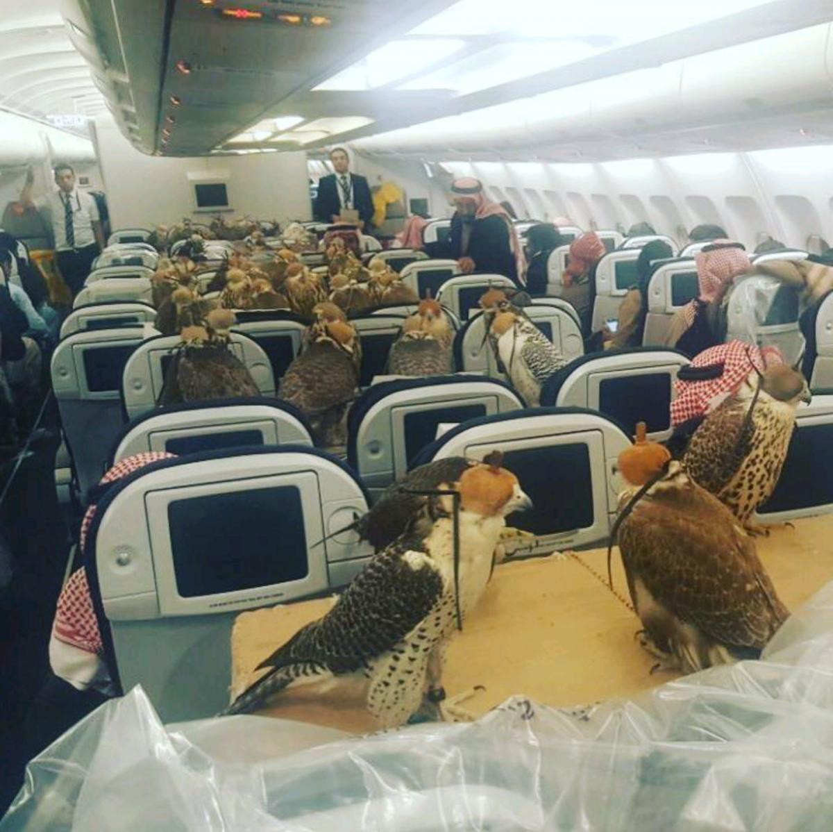 Arap Prensi 80 Yırtıcı Kuşuna Uçakta Bilet Aldı