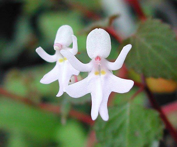 Gerçek olduğuna inanamayacağınız çiçekler...