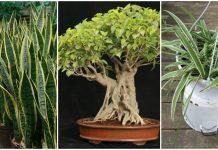 geceleri de oksijen üreten 3 bitki