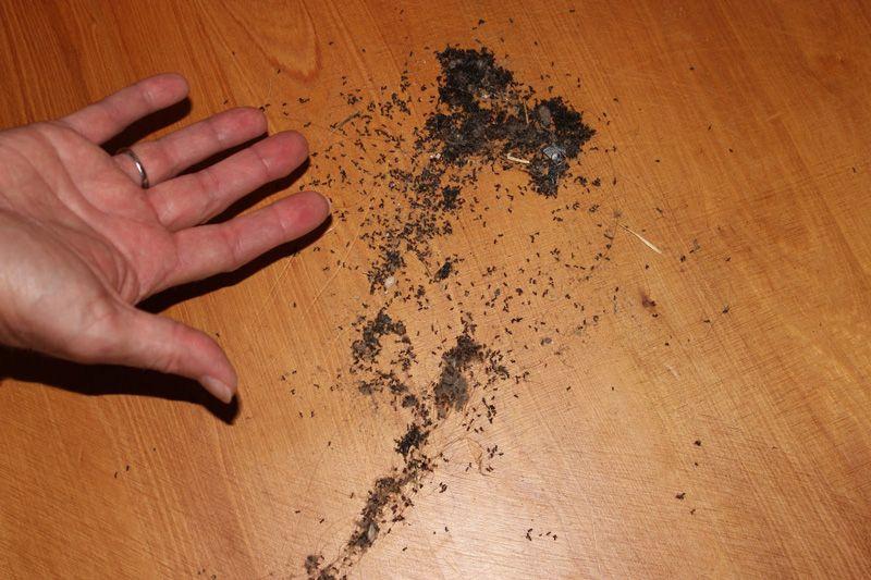 Karıncaları Zarar Vermeden Evden Kovabilmeniz İçin 5 Ucuz ve Doğal Yöntem