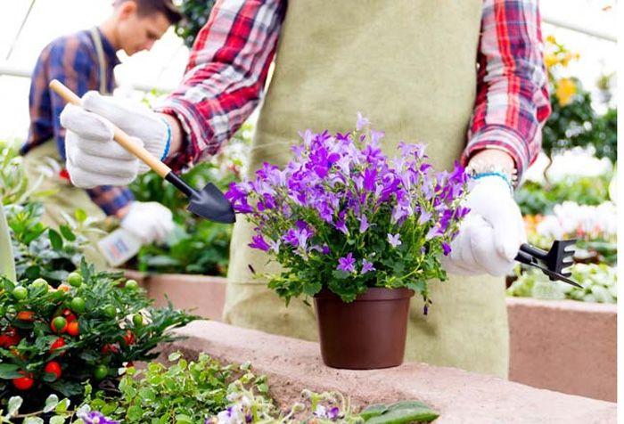 Çiçeğinizin dibine tarçın dökerseniz...