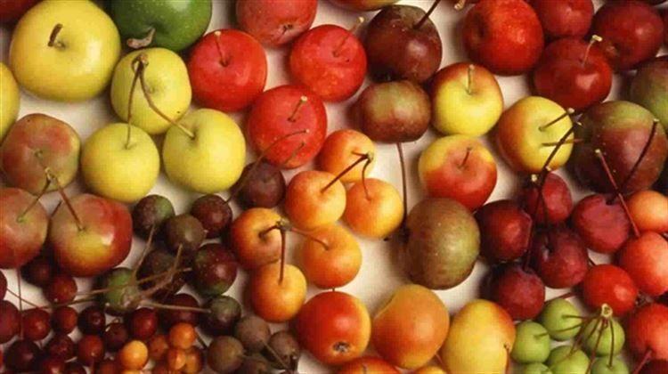 Meyvelerin çekirdeklerini poşete hapsetmeyin..
